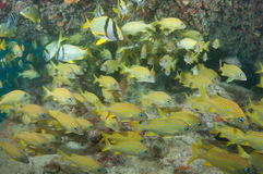 教育在击毁的鱼在基韦斯特岛 免版税库存图片