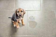 教育您的宠物 免版税库存图片