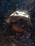 教育机构蘑菇 库存照片