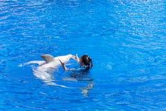 教练员与海豚的妇女跳舞在水池 免版税库存照片