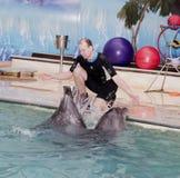 教练员举办在罗斯托夫dolphinarium的唱歌海豚 免版税库存照片