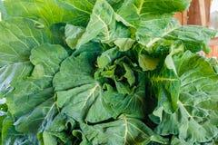 散叶甘兰新鲜的绿色照片 免版税库存照片