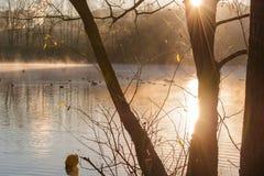 散开早晨雾的池塘 免版税图库摄影