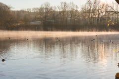 散开早晨雾的池塘 库存图片