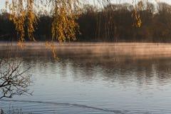 散开早晨雾的池塘 库存照片