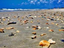散步在海滩  免版税库存照片