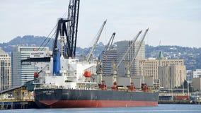 散装货轮槭树在奥克兰港的树丛装货  库存图片
