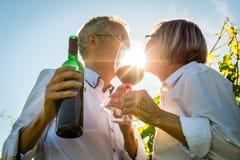 敬酒与酒杯的资深夫妇在葡萄园里 库存图片