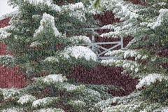 数字式一棵积雪的杉树的被操作的图象在前面的 免版税图库摄影