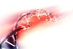 数字式脱氧核糖核酸例证 免版税库存图片
