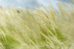 数字式水彩:在风的草甸振翼 库存照片