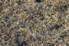 数百万海滩壳 免版税库存图片