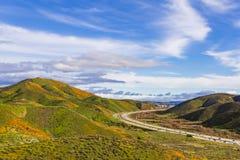 数百万花菱草在步行者峡谷/湖埃尔西诺,加利福尼亚 库存图片