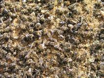 数百在蜂房的底部的死的蜂 免版税库存图片