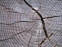 敲响结构树 库存照片