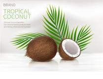 整个和半残破的椰树坚果 皇族释放例证