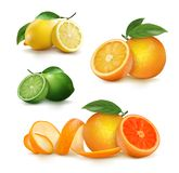 整个新鲜的柑橘水果和一半 免版税库存照片