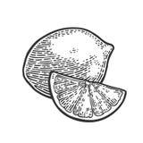 整个石灰和切片 葡萄酒传染媒介板刻例证 库存例证