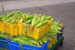整个绿色未成熟的玉米 图库摄影