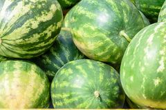 整个西瓜堆积了外部在农夫市场上 免版税库存照片