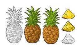 整体和切片菠萝 传染媒介黑葡萄酒板刻 库存例证
