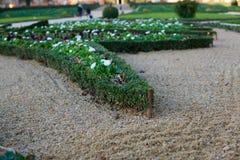 整洁地被整理的灌木在沙子庭院里 库存照片