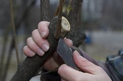 整理与刀子的灌木 免版税库存照片