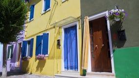 整理在明亮的生动的颜色上色的保管妥当的房子装饰用花 影视素材