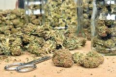 整理大麻芽和存放他们在玻璃瓶子 库存图片