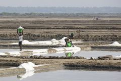 整理未认出的人的工作者,收集盐,在大盐调遣,体力劳动,有机农业,非常重活 图库摄影