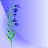 文本传染媒介的会开蓝色钟形花的草风轮草蓝色背景地方 图库摄影