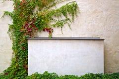 文本的框架在有绿叶的混凝土墙上 库存图片