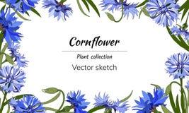 文本的花卉框架 在白色背景的明亮的蓝色花装饰的,纸,卡片,问候 Сentaurea ?? 皇族释放例证