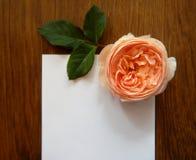 文本的英国玫瑰色和空插件在木头 库存照片