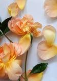 文本的英国玫瑰色和空插件在木头 免版税图库摄影