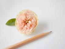 文本的英国玫瑰色和空插件 库存照片