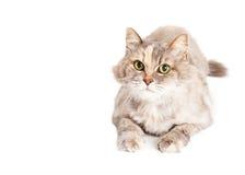 文本的逗人喜爱的猫室 库存照片