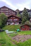 文根在瑞士阿尔卑斯 免版税库存照片