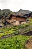 文根在瑞士阿尔卑斯 图库摄影