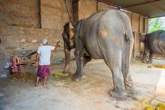 斋浦尔,印度2017年9月20日:未认出的人在他们的脚站立与两头巨大的大象,与链子在斋浦尔 免版税库存图片