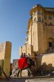 斋浦尔,印度- 2014年12月29日:装饰的大象运载对琥珀色的堡垒 图库摄影