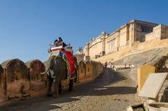 斋浦尔,印度- 2014年12月29日:装饰的大象运载对琥珀色的堡垒 免版税库存图片