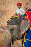 斋浦尔, RAJASTAN,印度- 1月, 27 :在Amb的装饰的大象 图库摄影