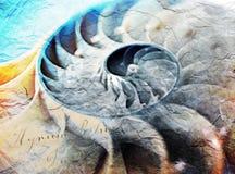 斐波那奇壳,金黄比率数字式绘画 图库摄影