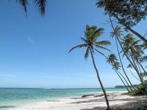 斐济岛最佳的海滩照片 自然全景 自然透明的水 在风下的高棕榈 库存图片
