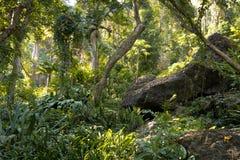 斐济热带密林 免版税库存照片