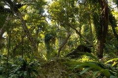 斐济热带密林 库存照片
