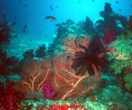 斐济礁石生活 库存图片