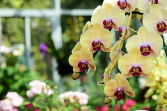 斑纹的兰花开花美丽的兰花花 免版税库存照片