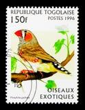 斑胸草雀(Poephila guttata),异乎寻常的鸟serie,大约1996年 库存照片